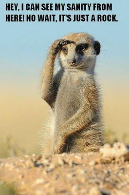 Meercats and Mining – Are we one and the same?